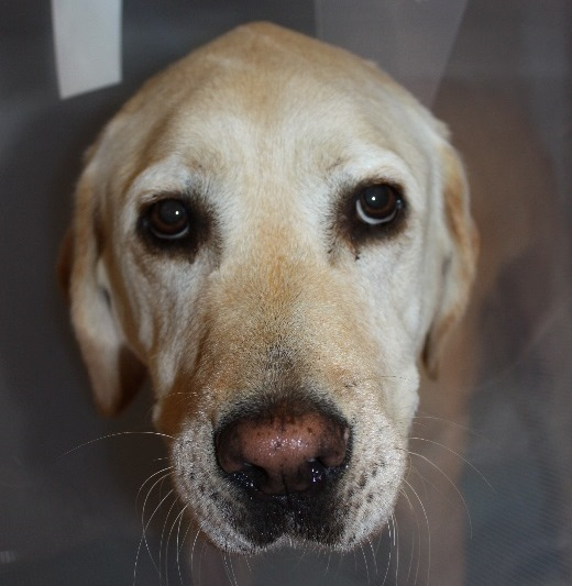 Caring for your pet after surgery