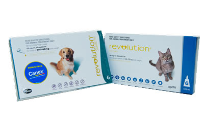 Revolution Flea Prevention